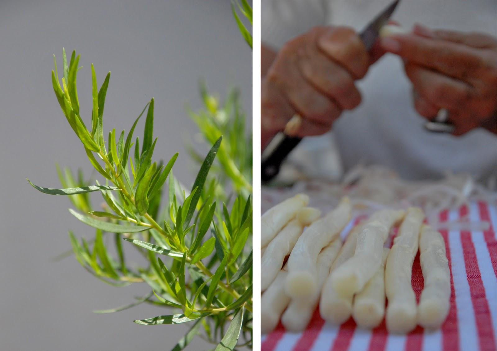white asparagus and tarragon