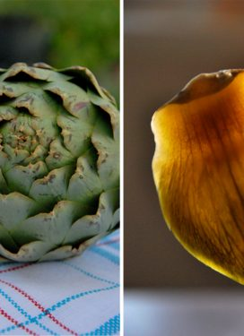 Marveling at rituals… and the artichoke